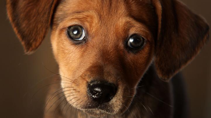 Generic Puppy Generic Dog