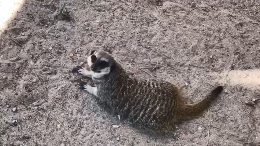 El Paso Zoo animal