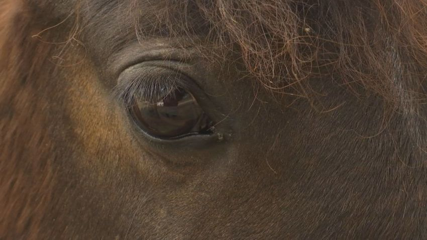 Close up on a brown horse's eye