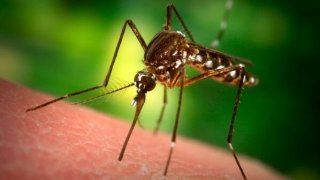 [UGCPHI-CJ]Cherry Hill mosquito pool tests positive for West Nile virus. The details @11pm. #NBC10 @NBCPhiladel