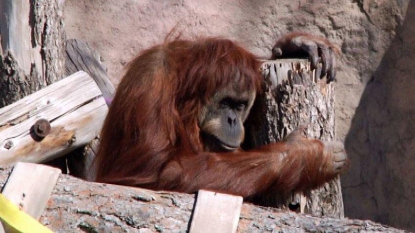 ibu-el-paso-zoo