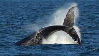 115446087CS031_Whale_Watchi