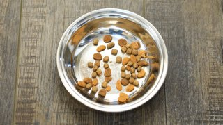 A food bowl for cats.